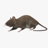 3d brown rat