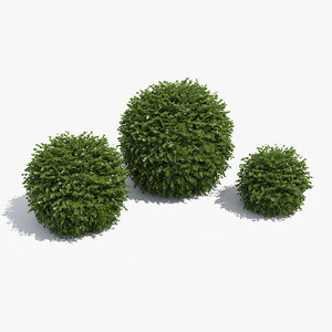 3d model of ball boxwood box set