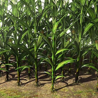 max corn maize maze