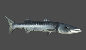 3d model barracuda games