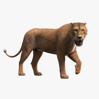 3d ma rigged lioness fur