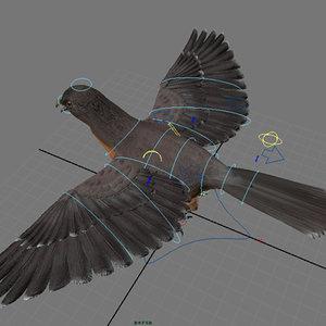 3d pigeon passenger model