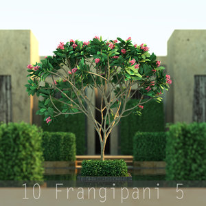 3d trunk flower 10 tree model