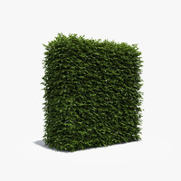 3d exterior boxwood hedge