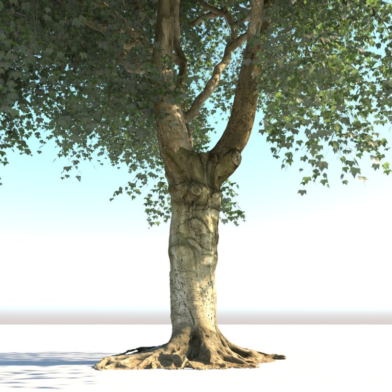 realistic old tree max