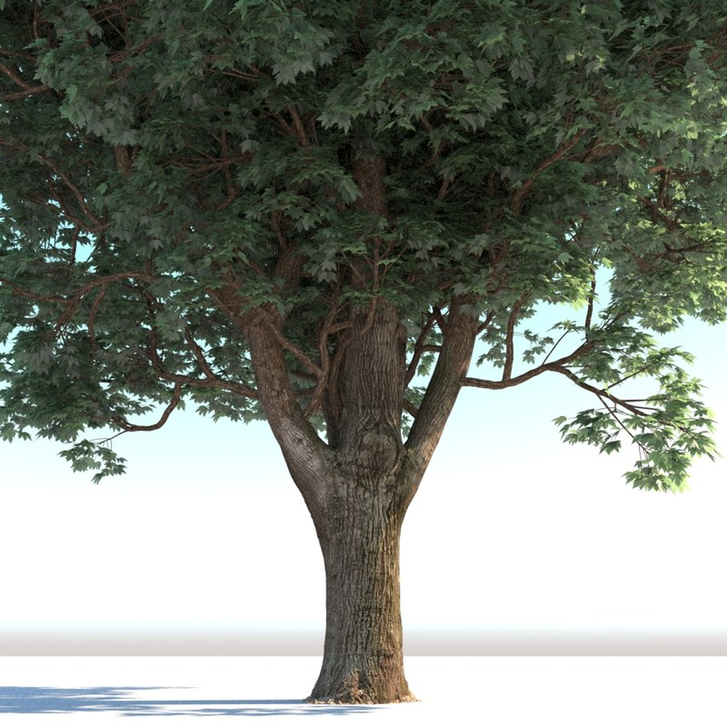 realistic mature tree max