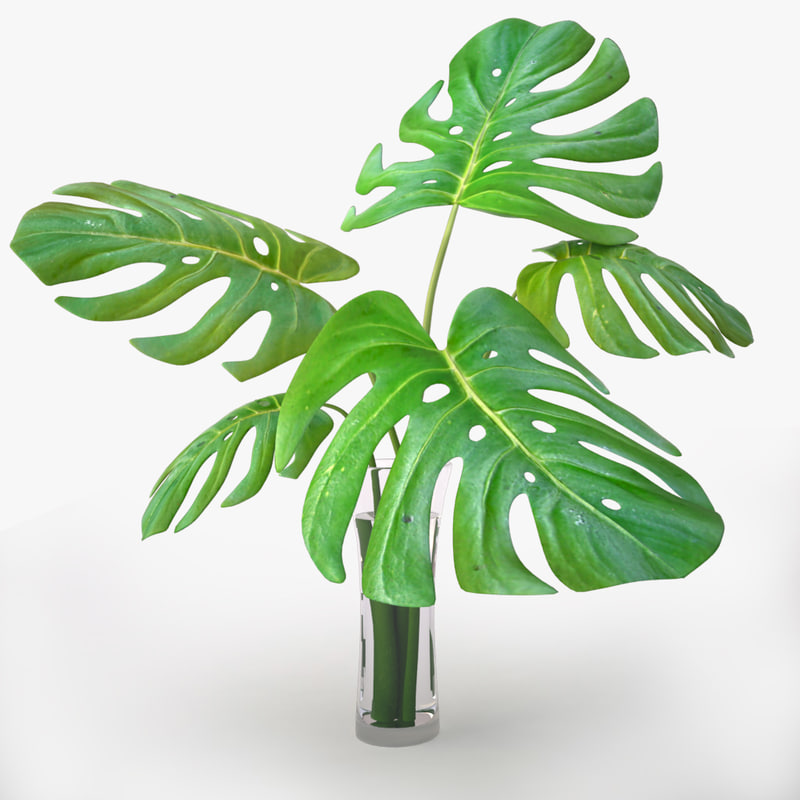 monstera plant 3d 3ds