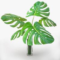 monstera plant 3d 3ds