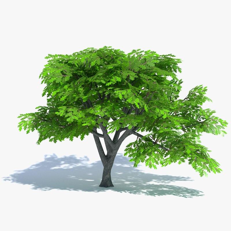 3d cartoon oak tree model