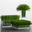 Grass Arrangement
