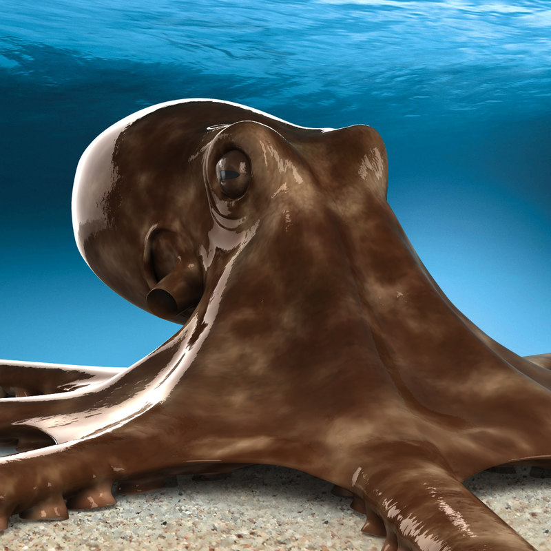 octopus tentacles 3d c4d