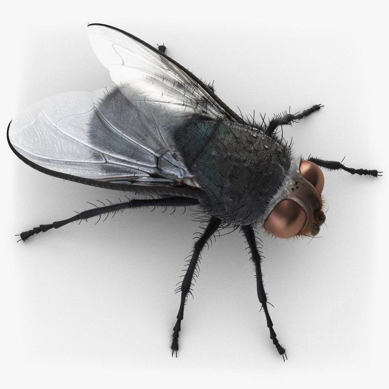 3d housefly fly