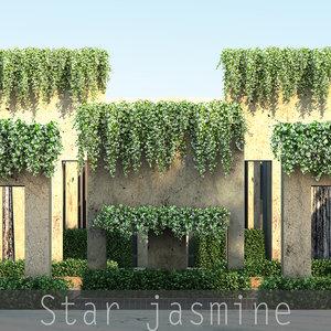 max star jasmine