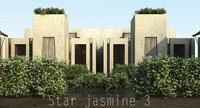 Star jasmine 3