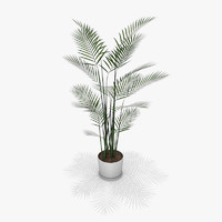 areca palm polygons 3d c4d