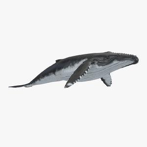 c4d humpback whale