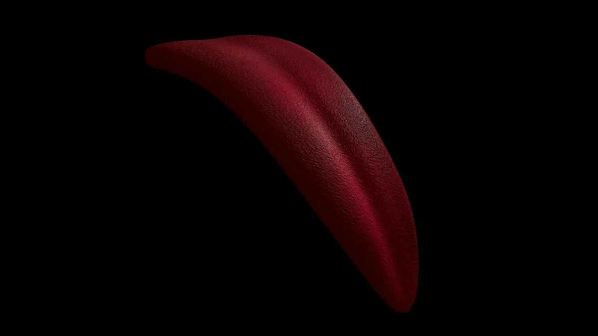 3d rigged tongue model
