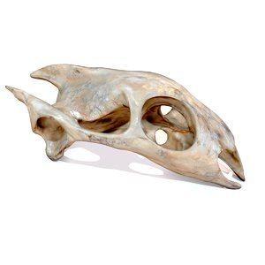 turtle skull obj