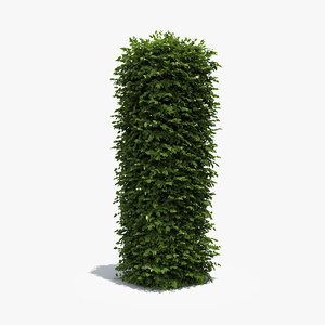 3d boxwood column model