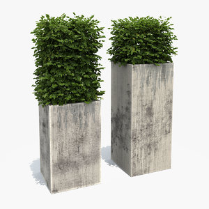 boxwood shrubs modern column 3d max