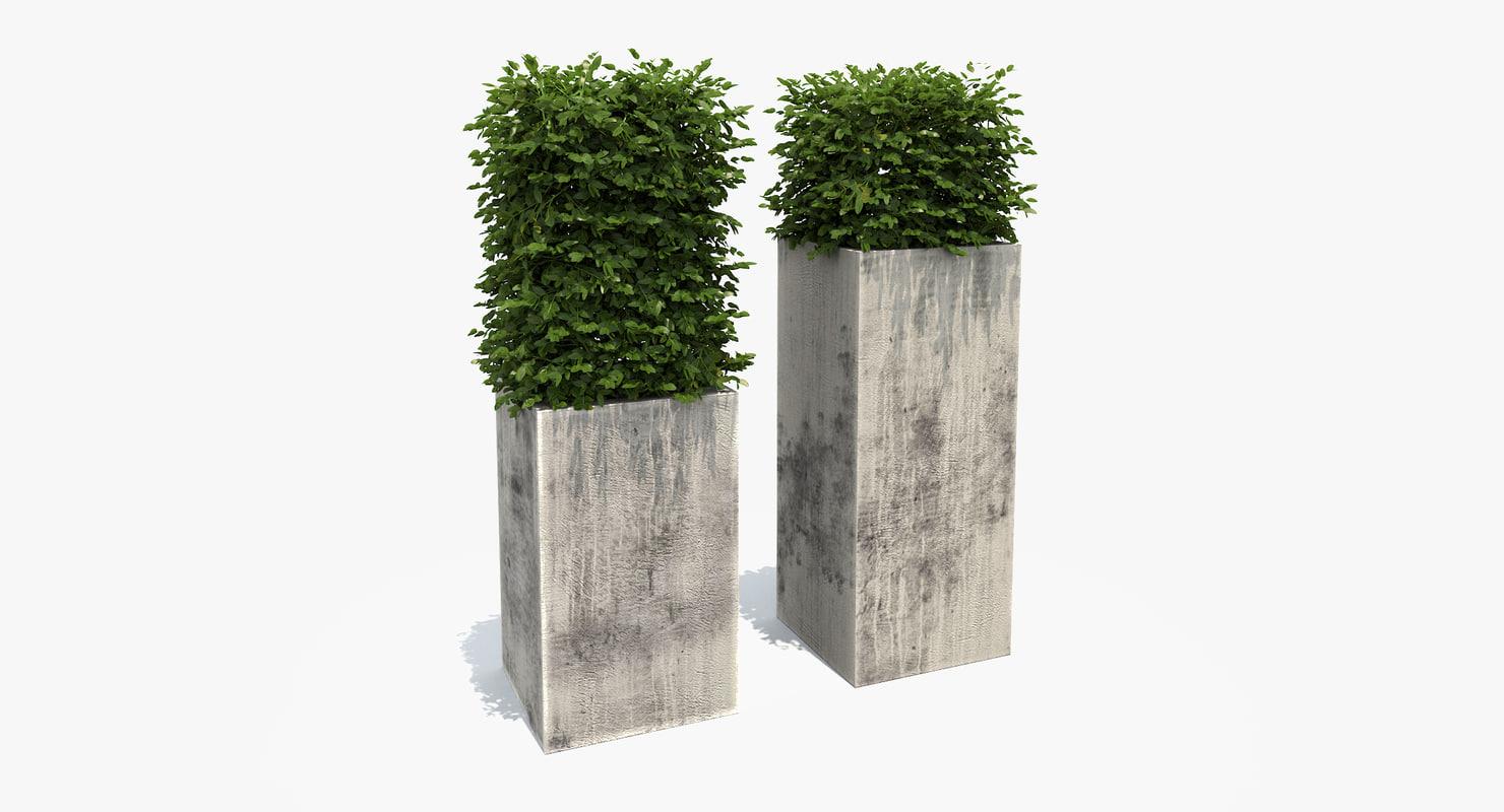 boxwood shrubs modern column 3d max
