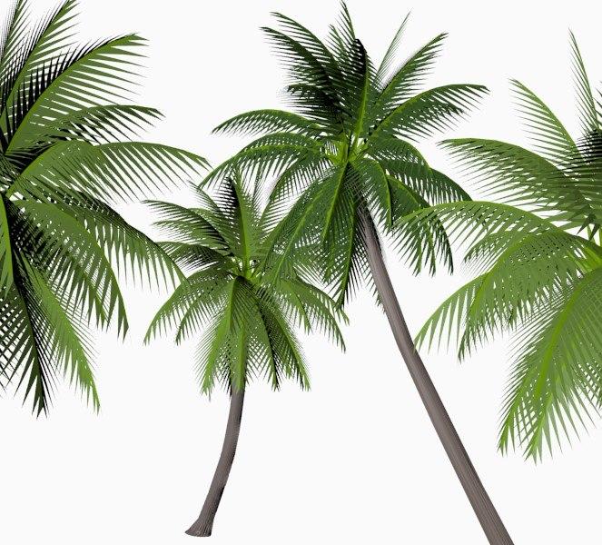 coconut palm 3d obj