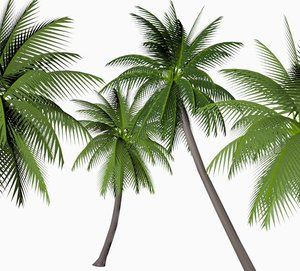 coconut palm 3d obj