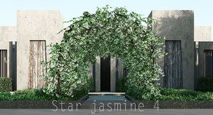 star jasmine max