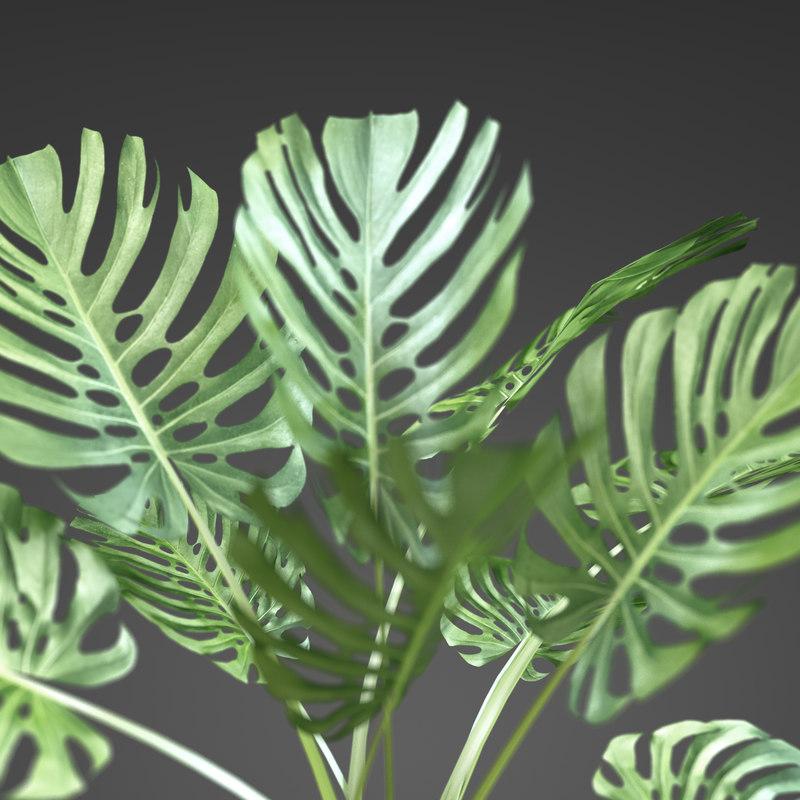 plant home 3d c4d