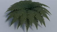 realistic fern plant - 3d obj