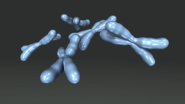 chromosomes obj