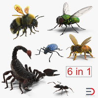 3d rigged insects bumblebee beetle model