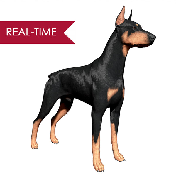 3d doberman pinscher real-time real time model