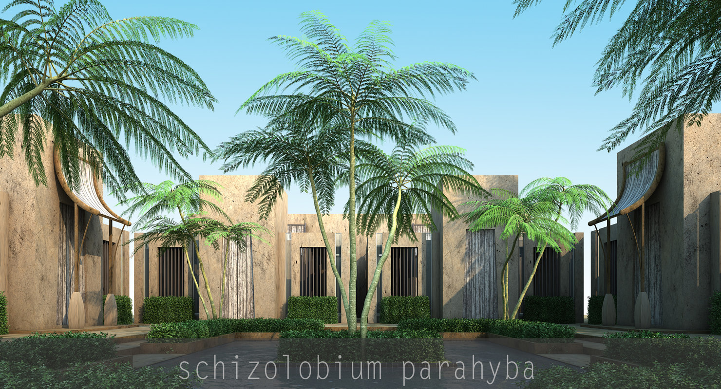 3d model schizolobium parahyba