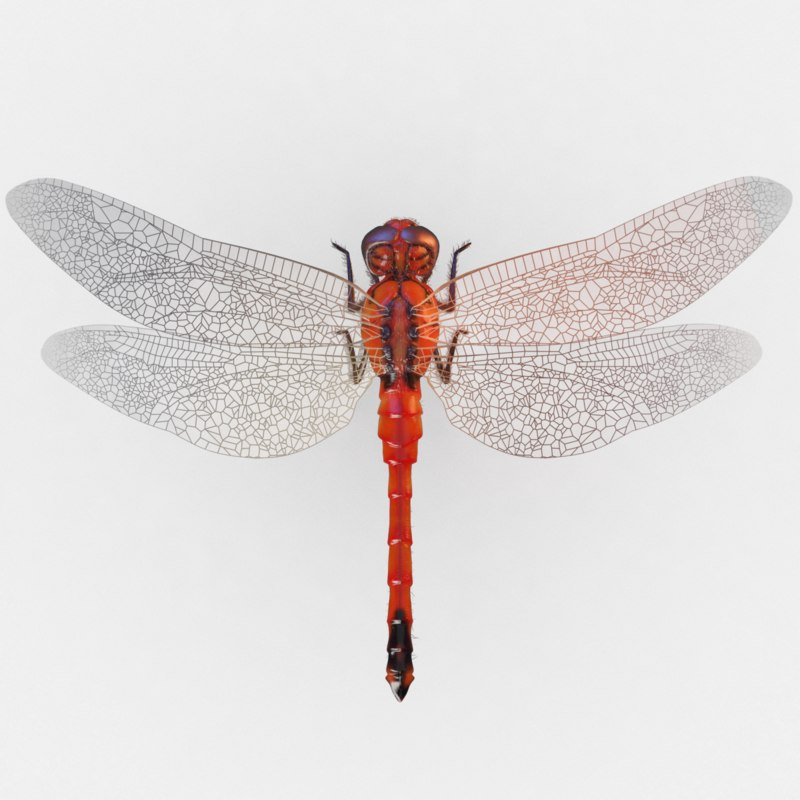 max dragonfly rigged animation