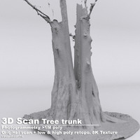 DBuzzi 3D Scan 5 Tree Trunks