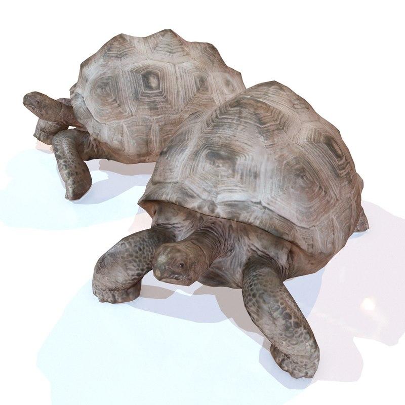 rigged tortoise 3d model