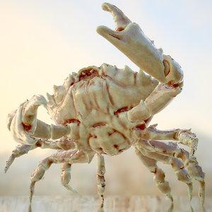 3d model of alien crab rigged