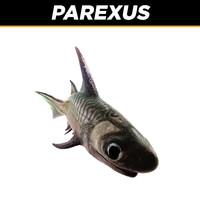 parexus c4d