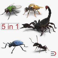 Insects 3D Models Collection