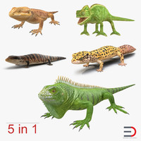 lizards chameleon bearded 3d model