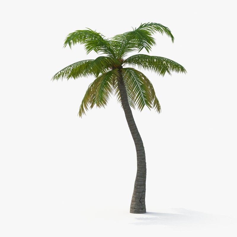 3d model of palm tree 01