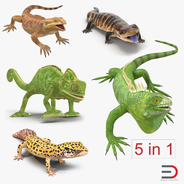 3d rigged lizards chameleon iguana