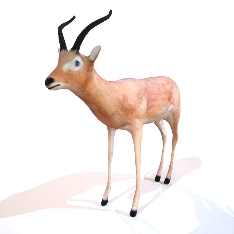 3d animal impala model