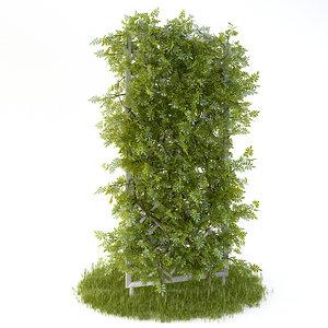 perennial climbing plant garden 3d model