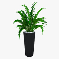 max plant zamioculcas flowering -