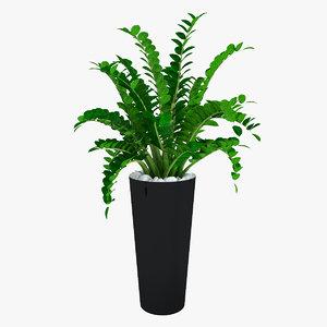 max plant zamioculcas flowering -