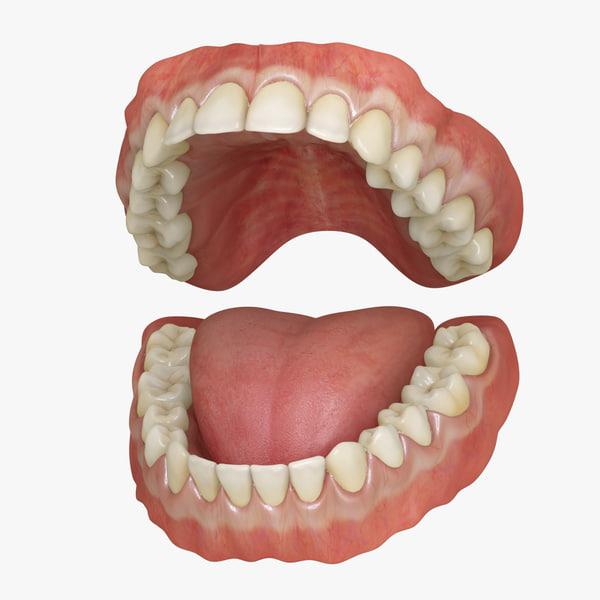 3d model of classic human dentition