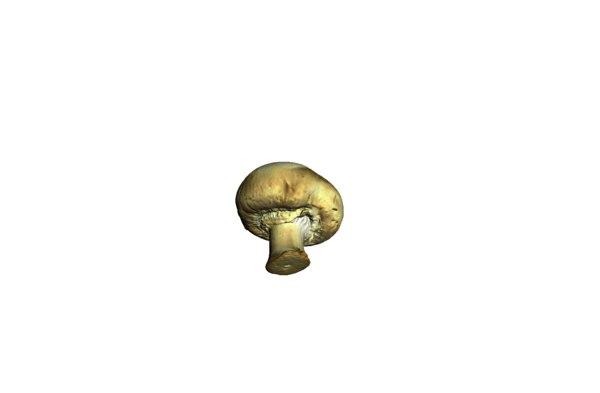 3d model champignon mushroom