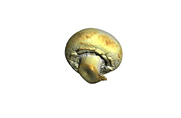 3d model of champignon mushroom